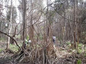 hutan-riau_uut