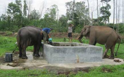 Gajah dewasa yang dipelihara WWF di Taman Nasional Teso Nelo, Kabupaten Pelalawan.(ERWAN SANI/RIAUPOS)